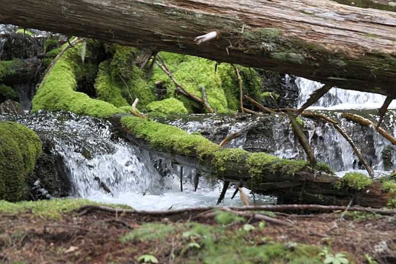 A Walk Around The Cascades
