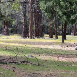 Campground Along The Metolius River 989