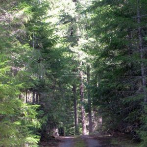 Cascade Mountain Road Oregon 185 Print Download