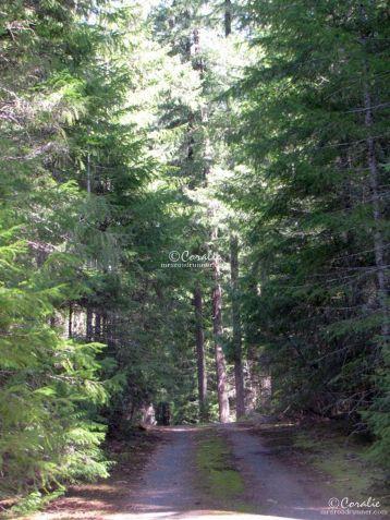 Cascade Mountain Road Oregon 185