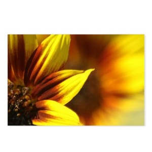 Color of the Sunflower Postcards (Package of 8)