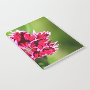 Flashy Dianthus Flower Notebook