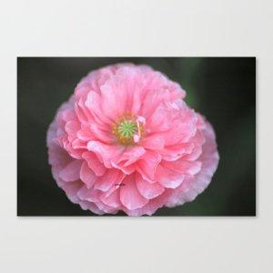 Pink Ruffled Poppy Flower Canvas Print
