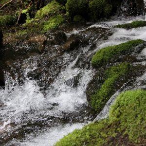 cascades 829