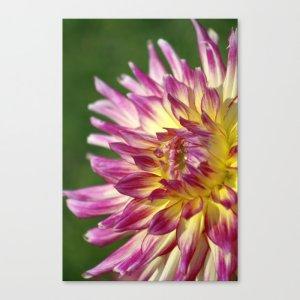 Flashy Dahlia Flower Canvas Print