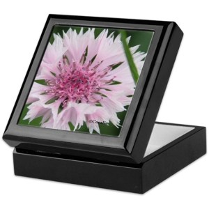 Bachelor Button Corn flower Keepsake Box