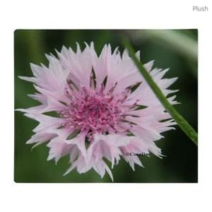 Bachelor Button Corn flower Throw Blanket