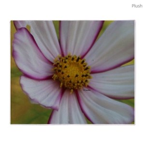 Colorful Bloom in the Flower Bed Throw Blanket