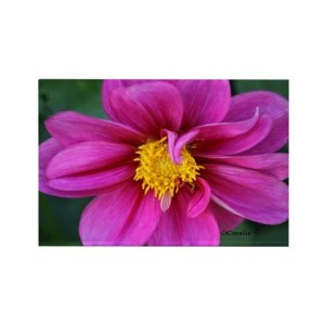 dahlia flower bloom Rectangle Refrigerator Magnet