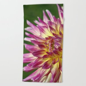 flashy dahlia flower Beach Towel