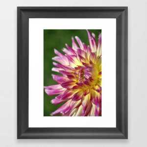 flashy dahlia flower Framed Art Print