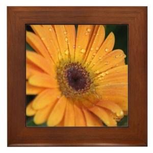 Colorful Chrysanthemum Flower Framed Tile