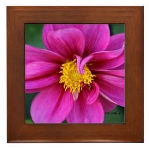 Dahlia Flower Bloom Framed Tile