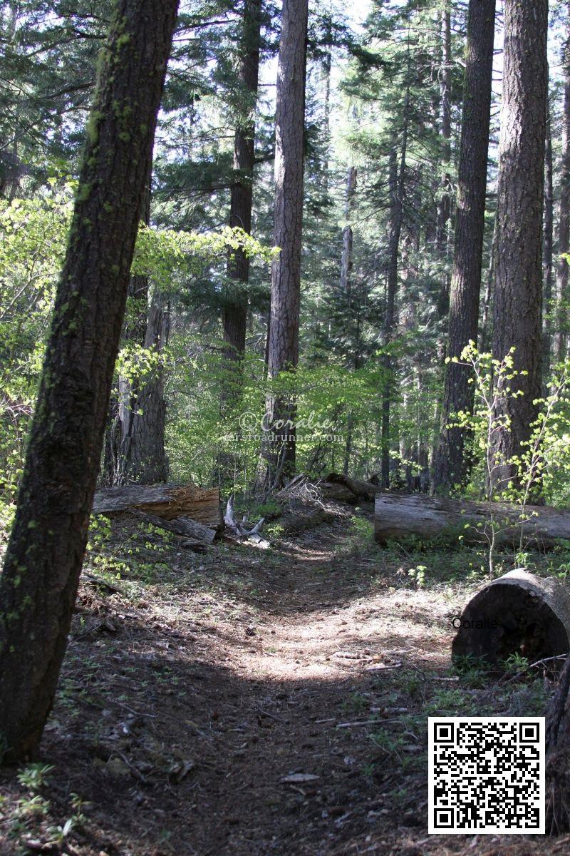 cascade mountain trail Oregon 1054