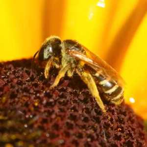 bee eyes T38A1253