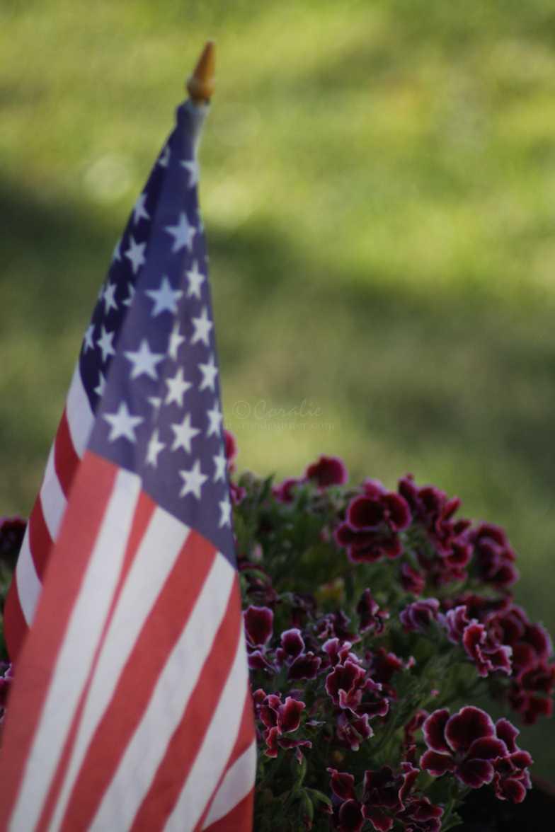 american flag flowers americana 145