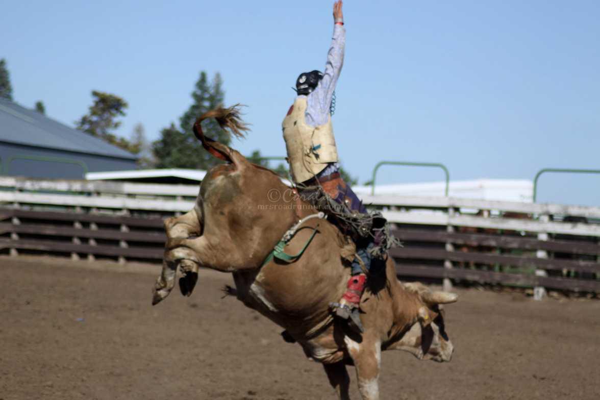 bull rider 3092