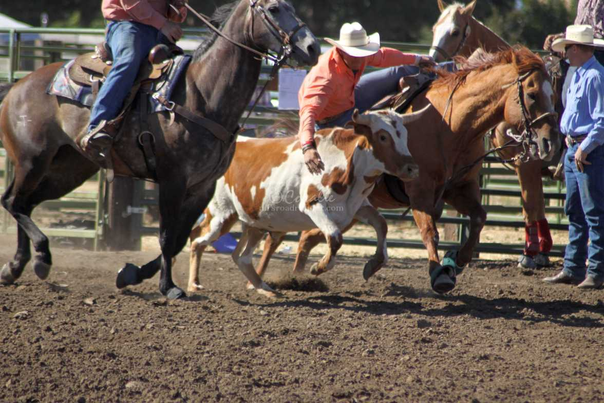 bulldogging rodeo 832