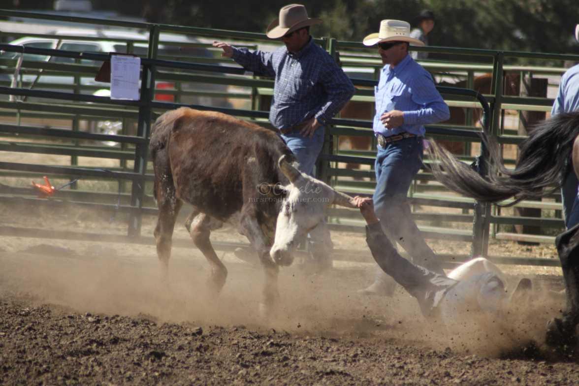 dirt flying bulldogging rodeo 993