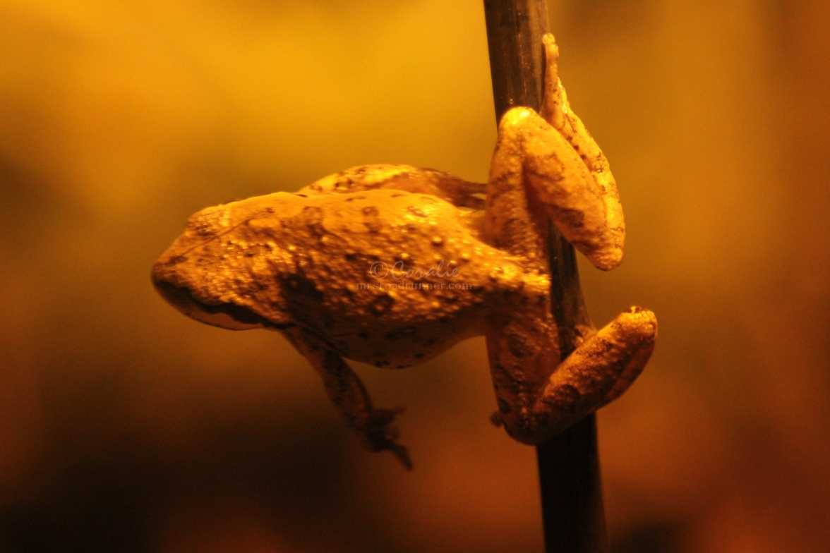 frog jumping 656