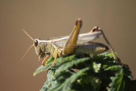 grasshopper 1215