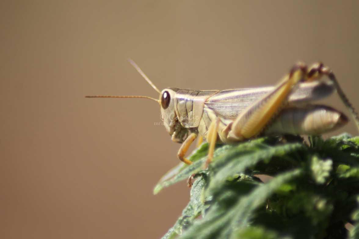 grasshopper 1221