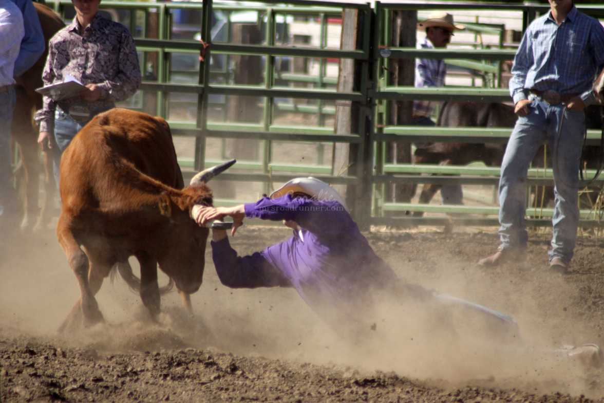 now what bulldogging rodeo 929