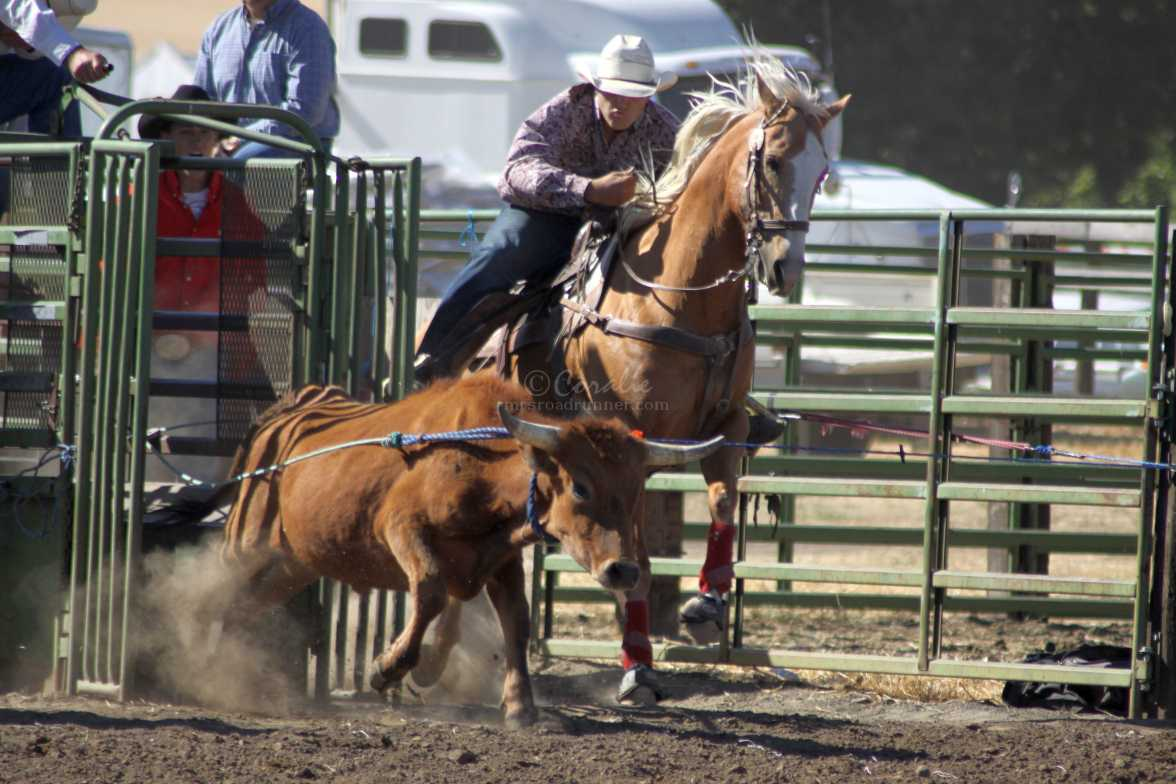 out of the shoots bulldogging rodeo 1016