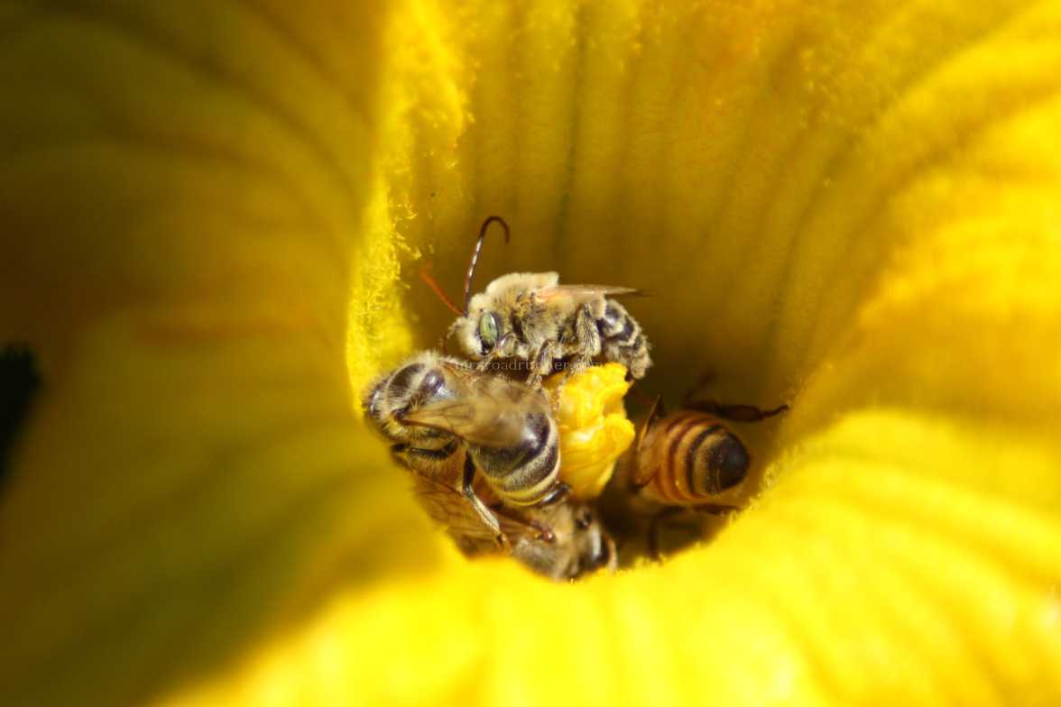 pollinators at work 399