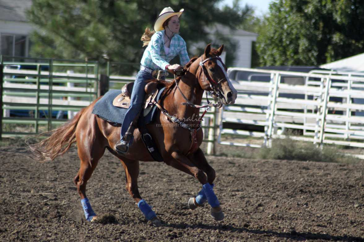 rodeo horse 3834