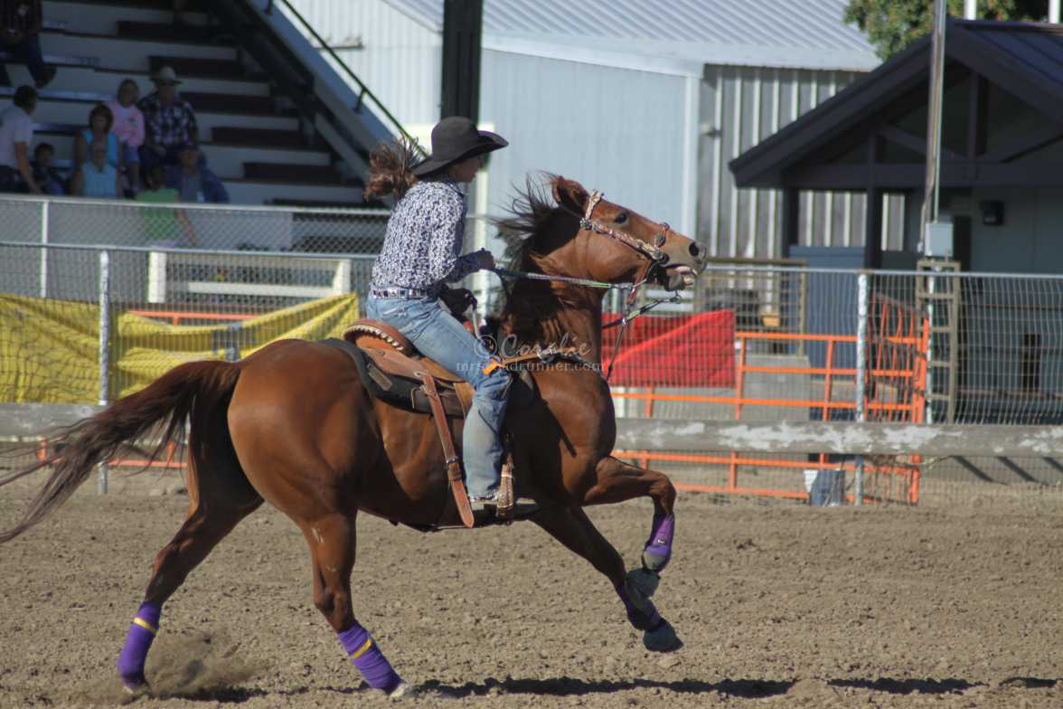 rodeo horse 4297