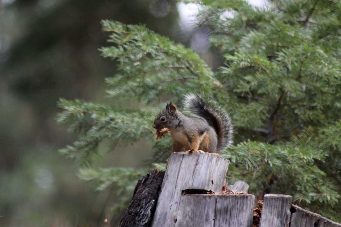 squirrel 098