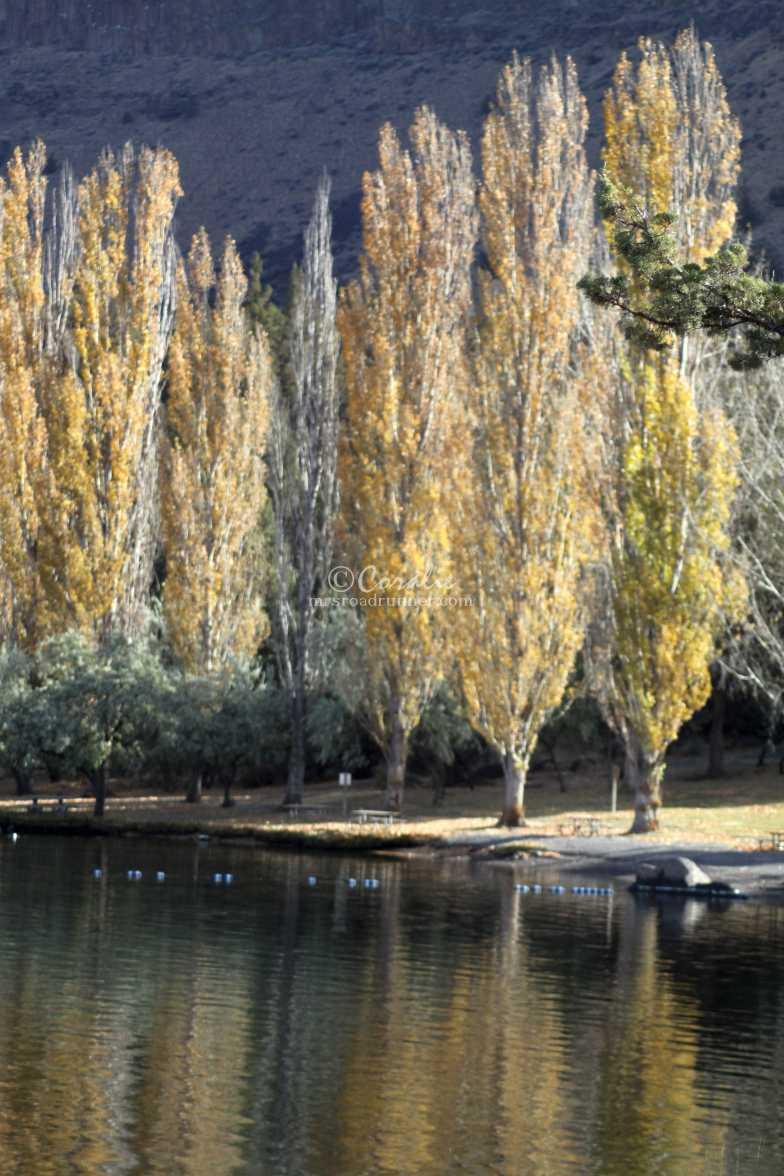 tree reflections 021