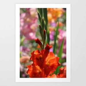 Colorful Orange Glad Flowers Art Print