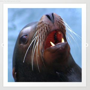 Micky The Wild Sea Lion Art Print