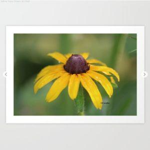 Yellow Daisy Flower Art Print