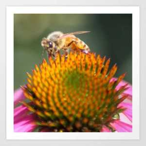 honeybee on cone flower 656 Art Print