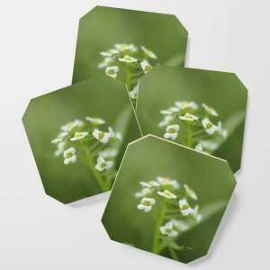 Alyssum Flowers Coaster