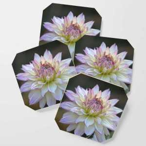 Colorful Dahlia Flower Bloom Coaster