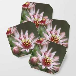 Hen and Chick Flower Coaster