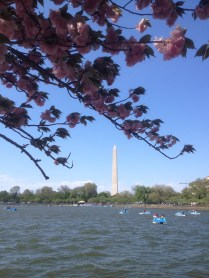 The view from the Jefferson Memorial