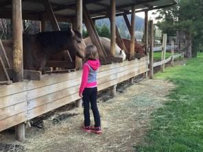 The treesort offers horseback riding.