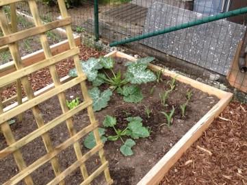 courgette en maïs bij de vruchtgewassen