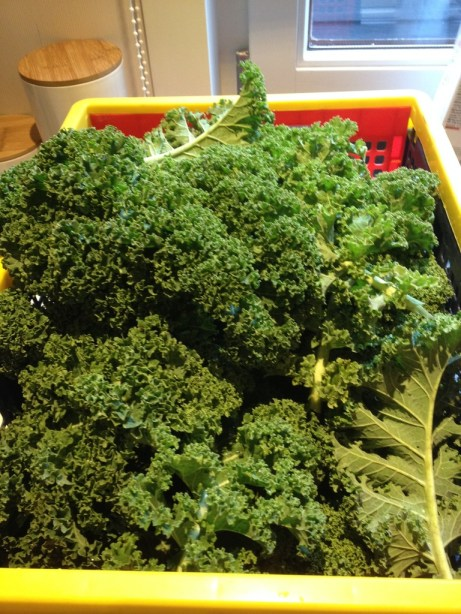 veeeeeel boerenkool - lot's of kale