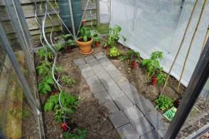 tomaten, aubergines en komkommer in de serre begin mei