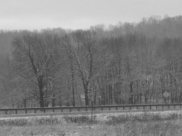 Black and white version of nearby trees across the highway