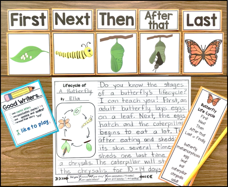 life cycle of butterfly sequence writing