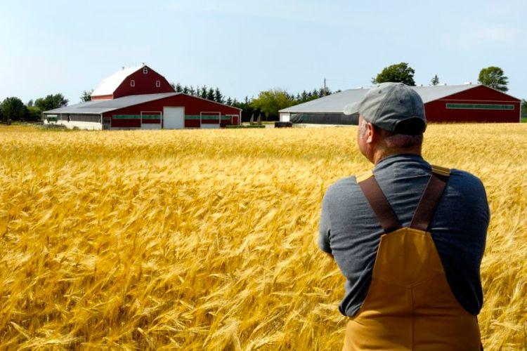 Farmer_field-looking