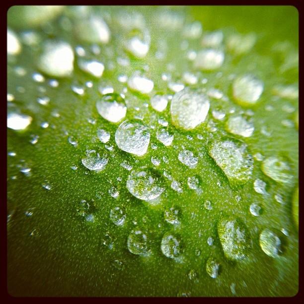 20120408 Morning dew