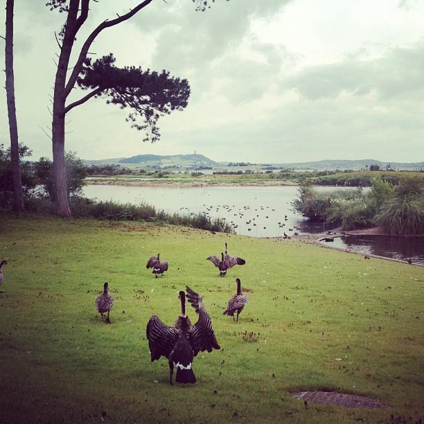 20120721 Returning geese